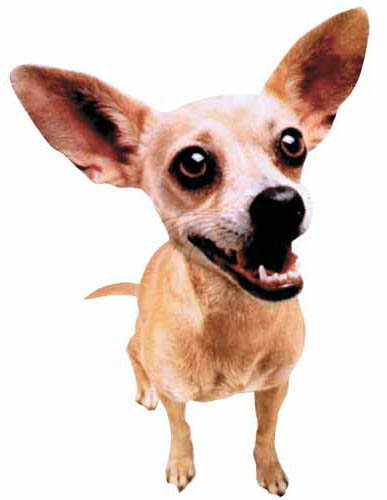 Tulsa Tuesday – Missing Chihuahua Leads to Shooting   The