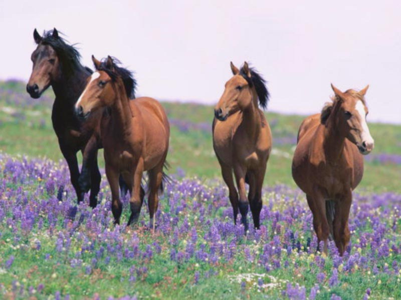 69219-field-flower-horses | The Lost Ogle