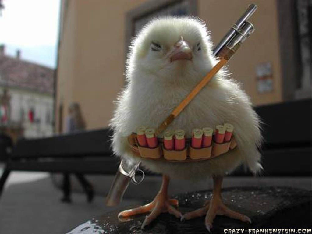 http://www.thelostogle.com/wp-content/uploads/2011/06/funny-wallpapers-chicken-war.jpg