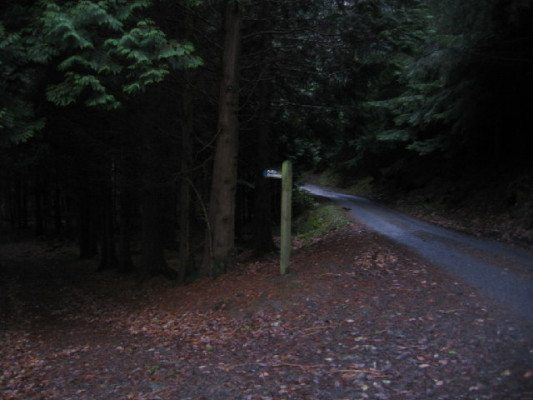 Dark_Wood._-_geograph.org.uk_-_86668