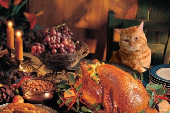 590x395_thanksgiving_cat