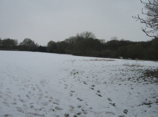 Footprints_in_the_snow_-_geograph.org.uk_-_1340931