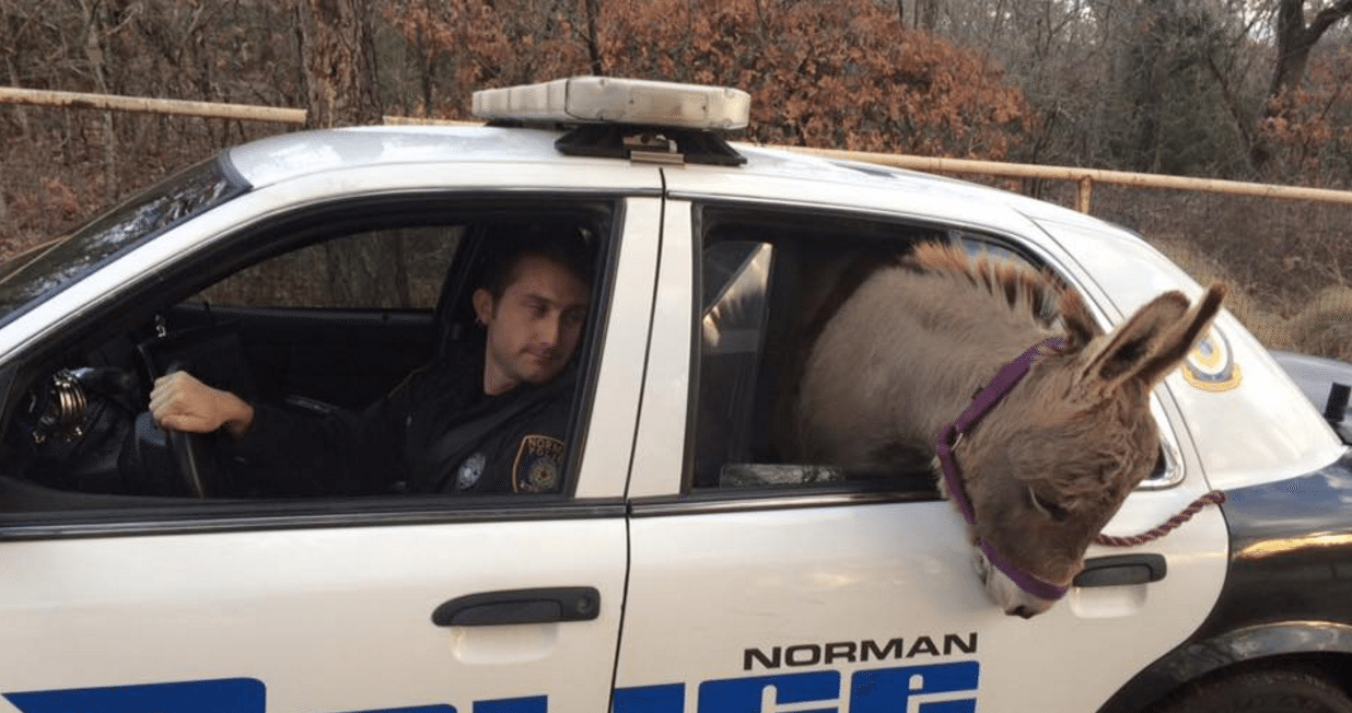 norman pd donkey